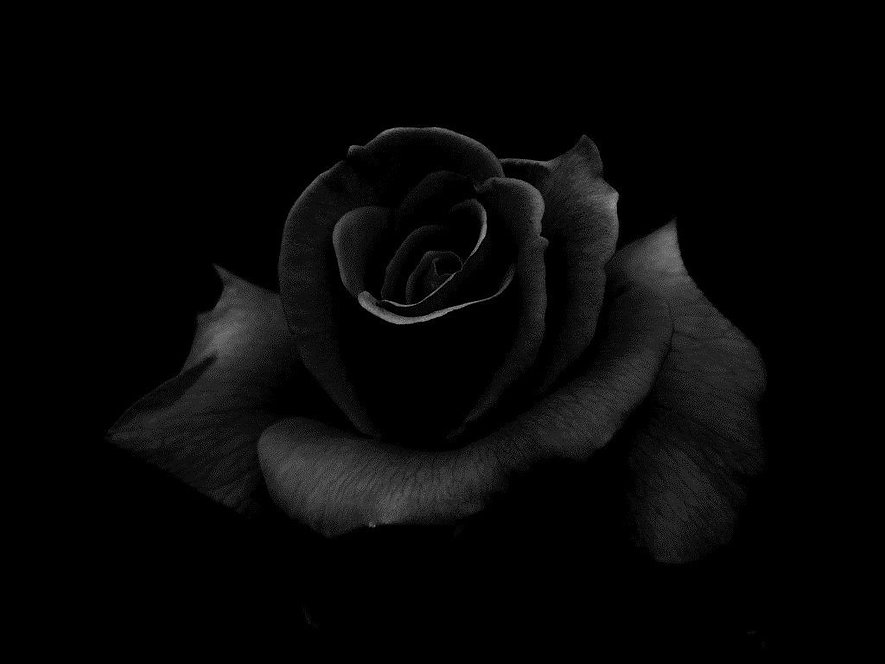 Black-Rose-Windows-Background.jpg
