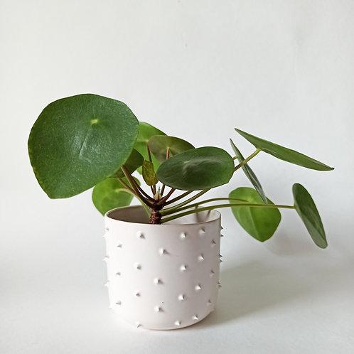 květináč- SPIKY-s