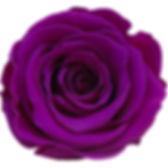 Rose violet.jpg