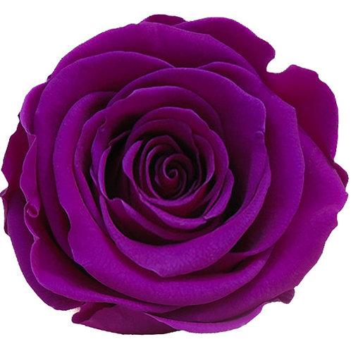 Rose, violet