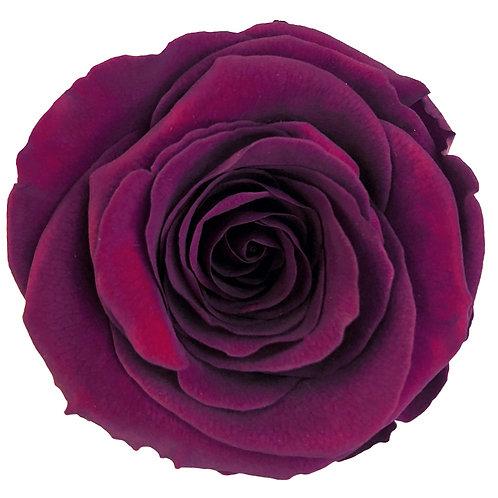 Rose, Prune
