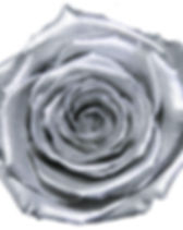 Rose argent.jpg