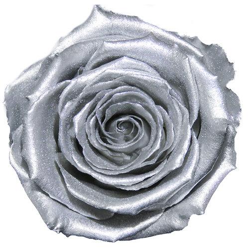 Rose, Argent