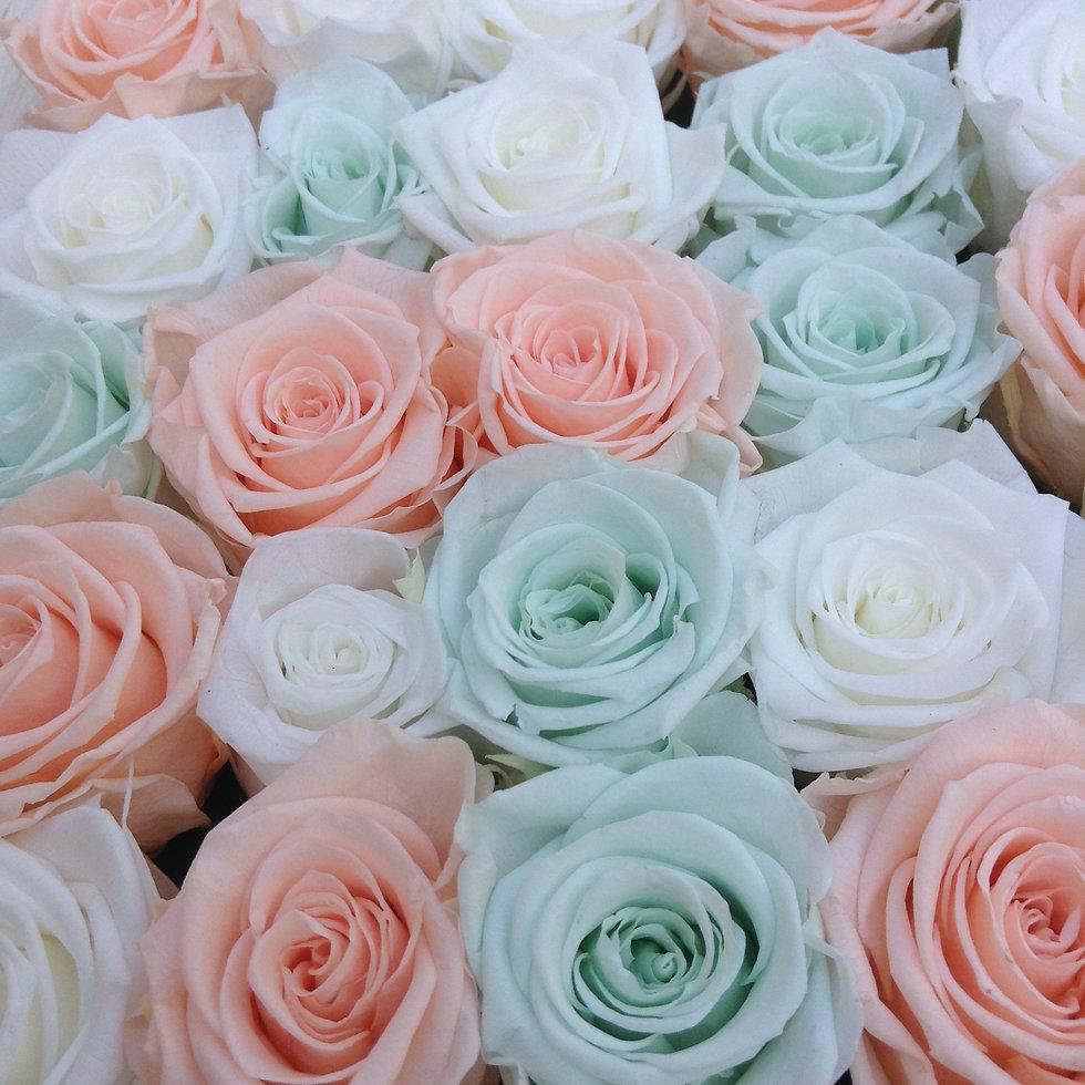 ROCK'N ROSES entretien des roses éternelles