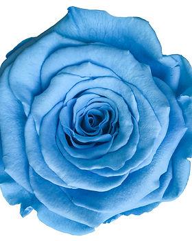 Rose bleu ciel.jpg