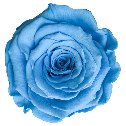 Rose, Bleu