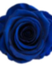 Rose bleu roi.jpg
