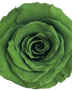 Rose vert gazon.jpg