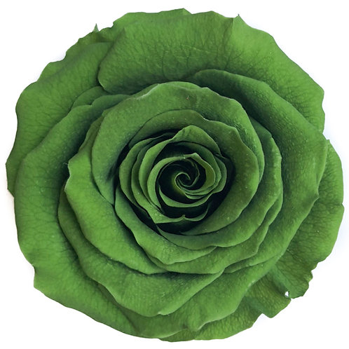 Rose, Vert foncé