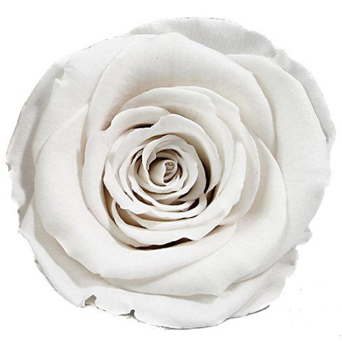 Rose, Blanc