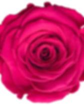 Rose hot pink.jpg