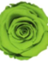 Rose vert.jpg