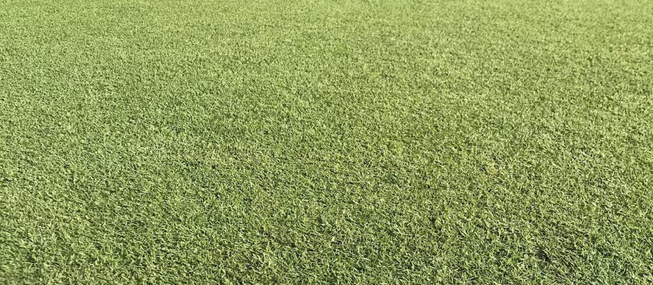 フアラライ コース 新しい芝の感触は?