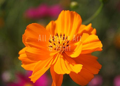 'Summer Floral Meadows' #1 - Greetings Card