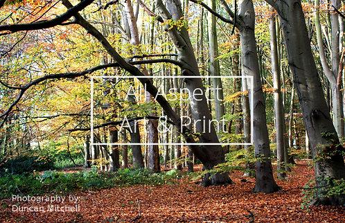 'Autumn Woods' Print