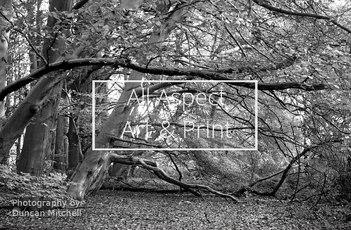 'Back To The Roots' (Black and White) Print