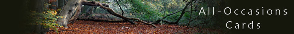 All-Occasions Greetings Cards. Printed by All Aspect Art & Print. Pictured is an autumnal woodland scene.