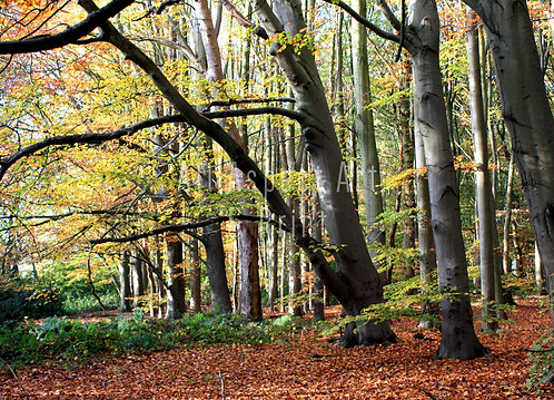 'Autumn Woods' - Greetings Card