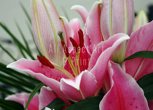 'Lily's' - Greetings Card