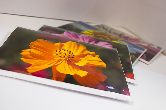 Brightly coloured photographic images of summer flowers, printed as greetings cards. Part of Duncan Mitchell's Summer Floral Meadows' collection.