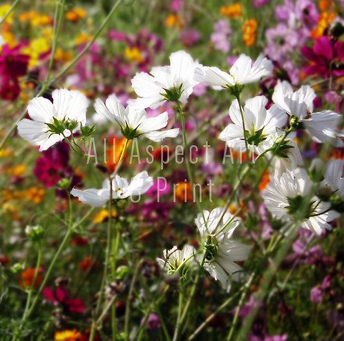 'Wild Summer Flowers' - Greetings Card