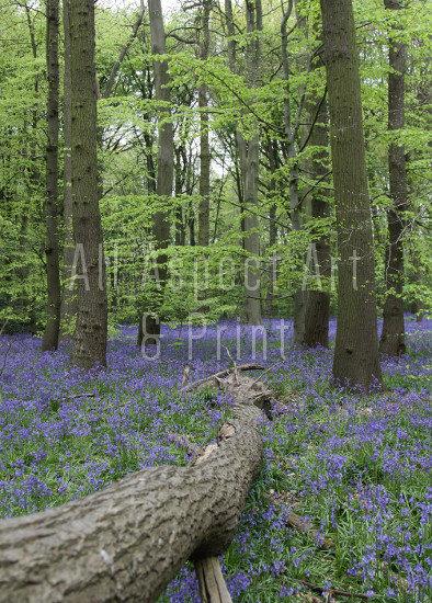 'Spring Woodland' #1 - Greetings Card