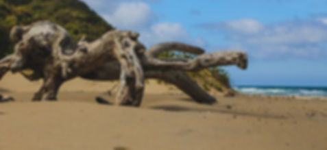 driftwood washing up on the beach 20m from the Kraal Eco Lodge