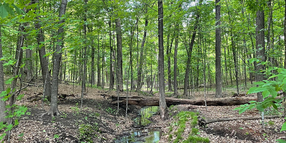 Forest Bathing: Quick Dip