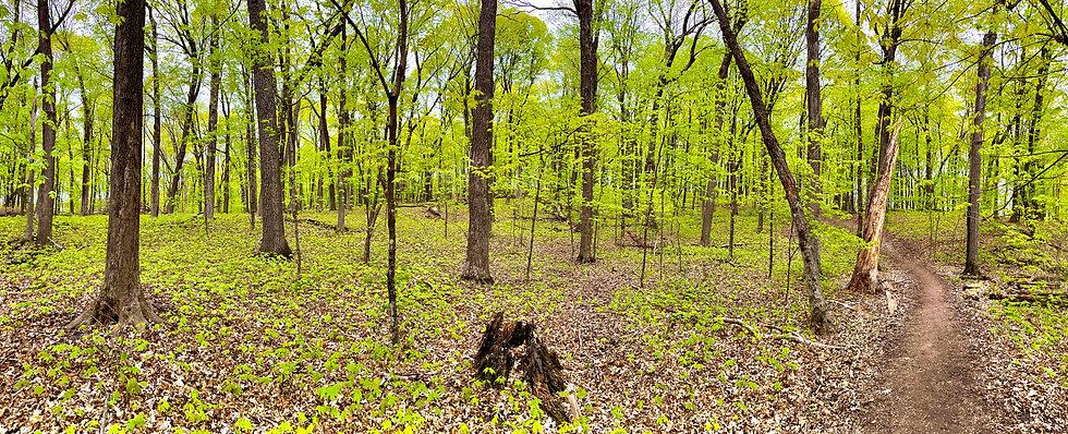 Wood Rill SNA.jpg