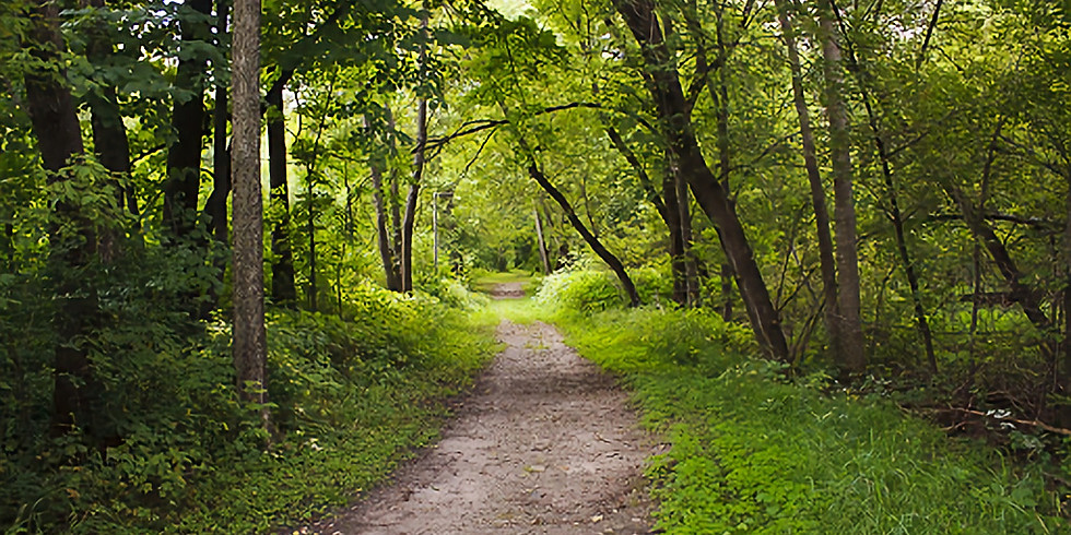 Three Rivers Park District: GreenFit Club Forest Bathing Walk