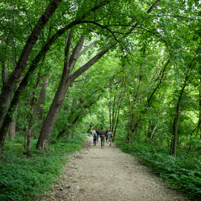 THE BENEFITS OF FOREST BATHING: How It Can Make You Healthier, and Why You Need To Try It