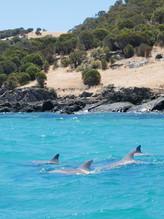 Native dolphin pod