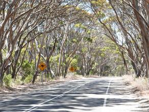 Hog Bay Road