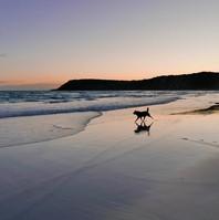 A sunset stroll on Pennington beach