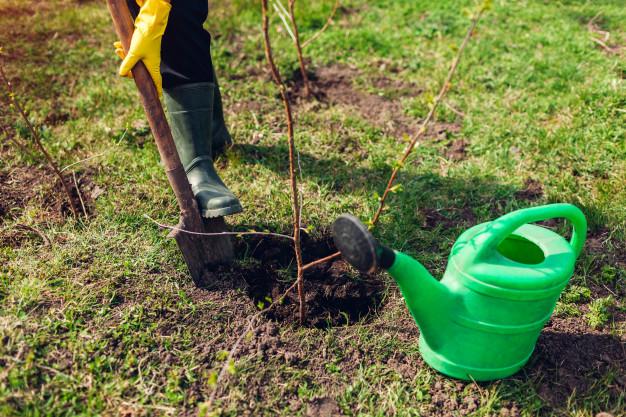 ogrodnik-sadzenia-drzewa-w-wiosennym-ogr