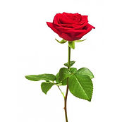 rosas-individuales-min-10.jpg