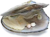 osctrica caon perla.png