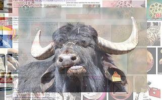 la-riproduzione-delle-bufale.jpg