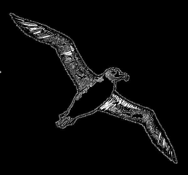 29616-4-albatross-image.png