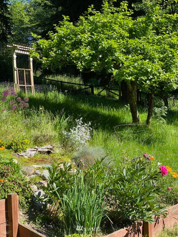 RoyRoad_Garden2.jpeg