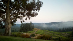 Peay Vineyards