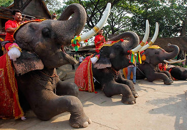 pc-thailand-national-elephant-day-02_c8f