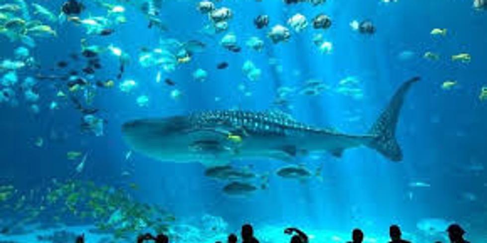 BSA Sponsored Georgia Aquarium Camp-In