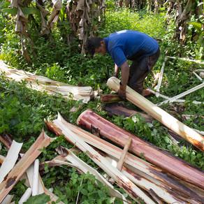 Furukawa: se alarga la pesadilla de los abacaleros