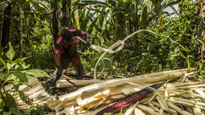 Trabajadores ecuatorianos explotados como hace 200 años