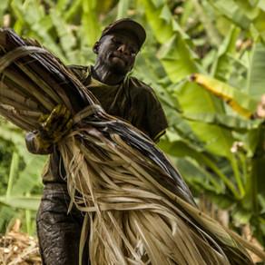 Sobrevivientes de esclavitud moderna recibirán tierras como forma de reparación