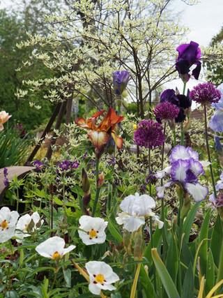 Beautiful Shrubs & Perennials