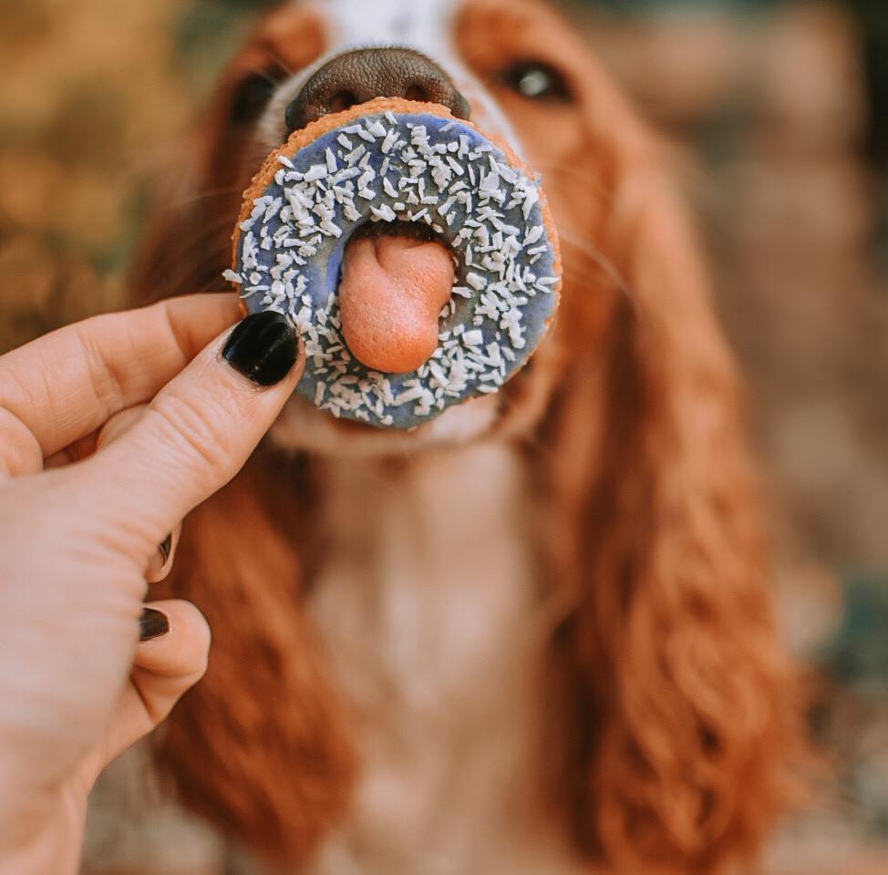 Olli with a Flooffy Donut