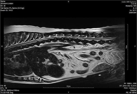Galen 1.5T dedicated veterinary MRI dog spine dicom