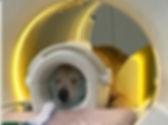 mri-vet-scan-coil.jpg